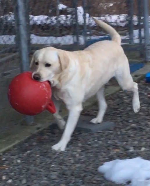 Doggy Daycare Near Albany nY