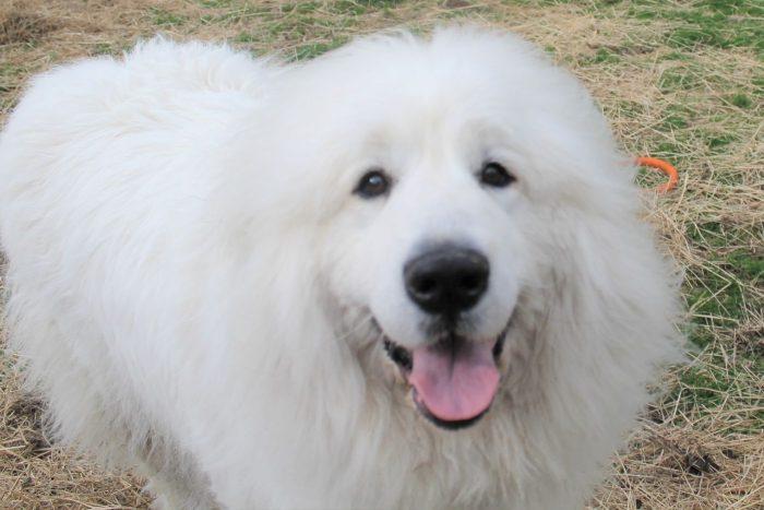 Dog at Averill Park Kennel Near Albany NY