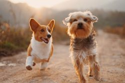 Safety in Pet Boarding at Creekside kennels