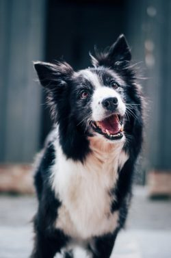 grain free diet for dogs